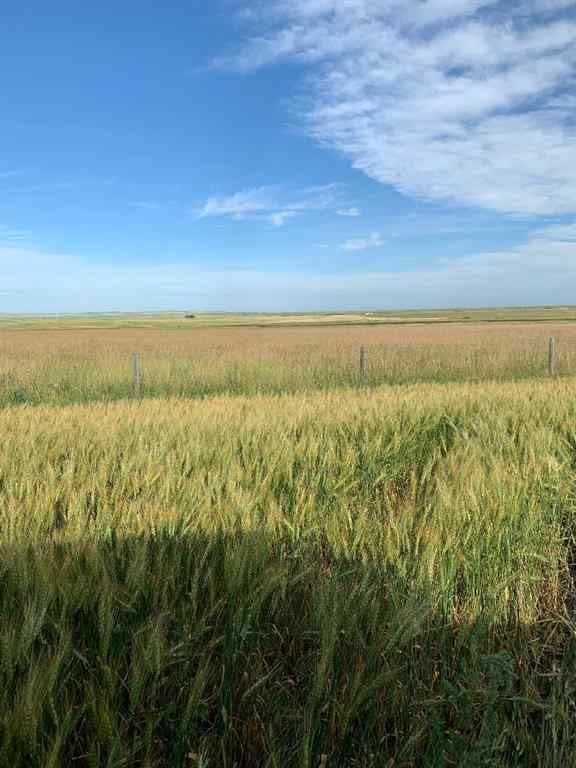 MLS® #C4242593 -  RR   in NONE Rural Vulcan County, Land Open Houses